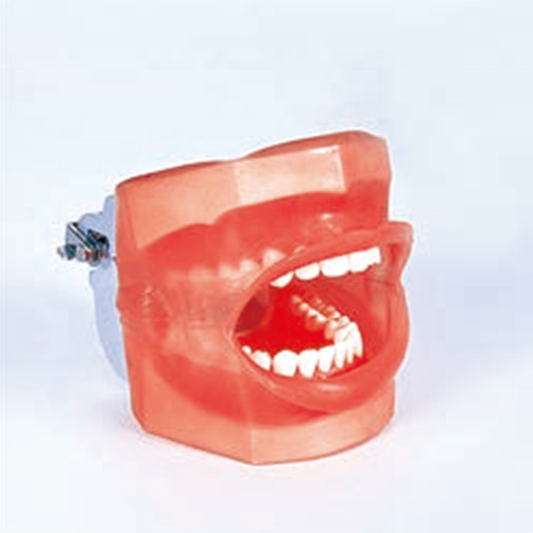 A Dental Simple Manikin with Water Drain